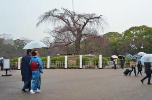 kyoto printemps 01c