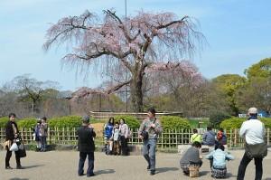 kyoto printemps 01d