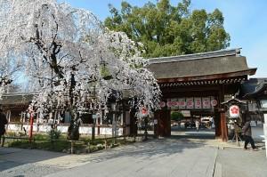 kyoto printemps 06b