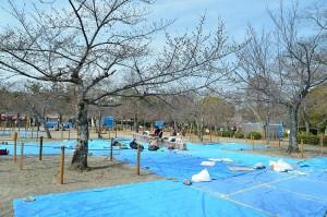 Apparition des premières bâches bleues. C'est là-dessus qu'on s'installera pour pique-niquer sous les cerisiers en fleurs.
